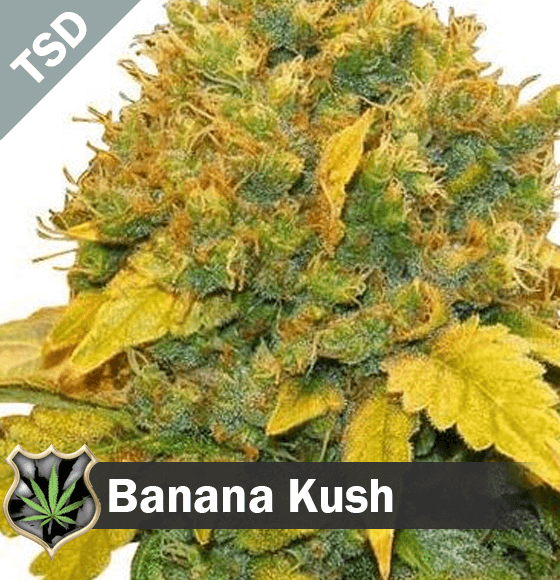 banana kush Cannabis Seeds