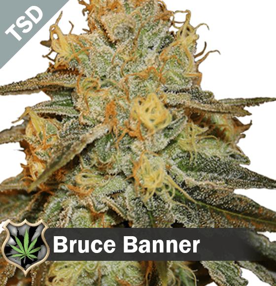 bruce banner seeds