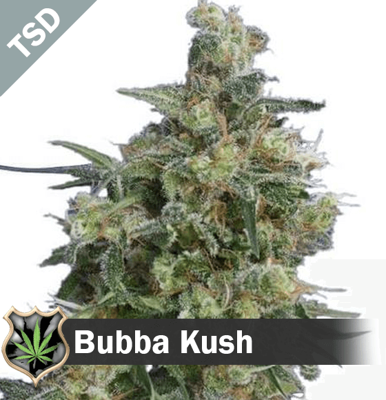 bubba kush Cannabis Seeds
