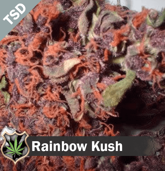 Rainbow Kush cannabis strain seeds