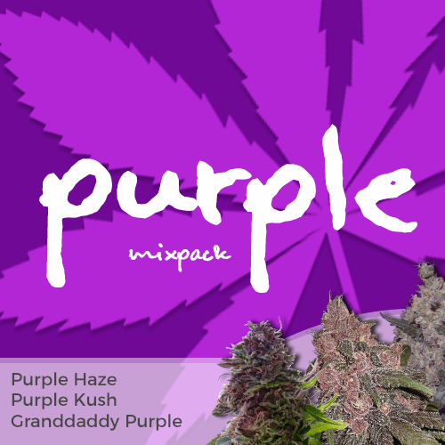 Order Purple Mixpack Cannabis Seeds