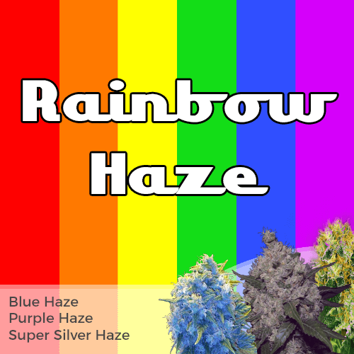 Order Rainbow Mixpack Cannabis Seeds