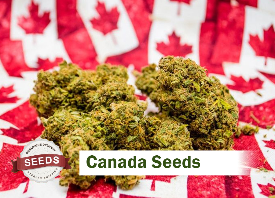 Canada seeds