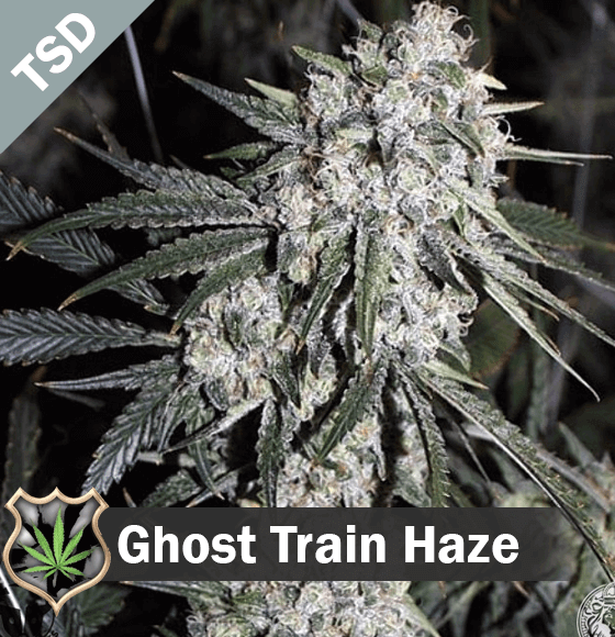ghost train haze Cannabis Seeds