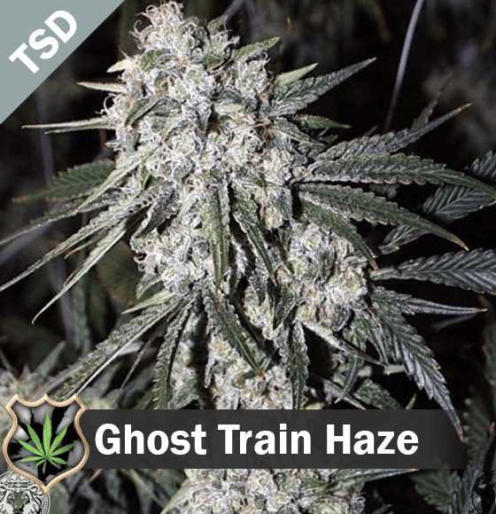 Ghost Train Haze cannabis strain seeds