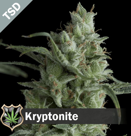 kryptonite Cannabis Seeds