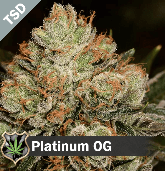 platinum og Cannabis Seeds
